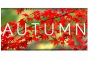 Autumn Steam CD Key