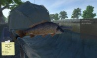 Carp Fishing Simulator Steam CD Key