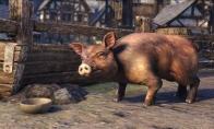 The Elder Scrolls Online - Bristlegut Piglet + 15 days of TESO Plus DLC Digital Download CD Key