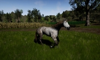 Horse Riding Deluxe Steam CD Key