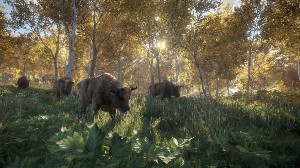 activation key for thehunter call of the wild